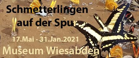 logo-schmetterlingen-auf-spur