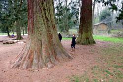 © massow-picture Mammutbäume und andere exotische Pflanzen.