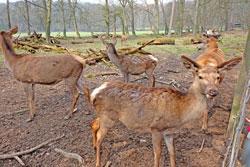 Damwild-Gehege im Tier- und Pflanzenpark Fasanerie auf Eurokunst