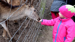 © massow-picture mit speziellem Futter, das es im  Laden gibt, dürfen die zutraulichen Tiere im Tierpark Fasanerie Wiesbaden gefüttert werden.
