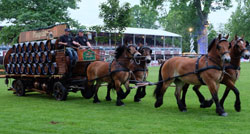 Pfungstädter-Bierwagen gezogen von vier Kaltblütern.  © massow-picture