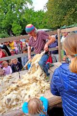 Eine der Attraktionen war auch wieder Schafschur  © massow-picture