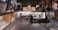 Kraulen, Brust oder Rücken? Die Schwimmtechnik der urzeitlichen Meeressaurier wird grafisch verdeutlicht. Foto: Sven Tränkner, Senckenberg