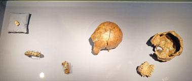 1,5 bis 1 Mio. Jahre alte Schädel (Sangiran 2 Sangiran 4),© massow-picture