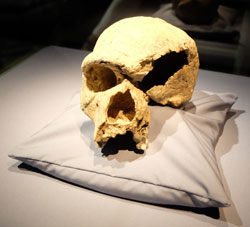Homo steinheimensis. © massow-picture