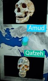 Man traf sich, man liebte sich, man vermischte sich in Levante. Neandertaler aus Amud vermischten sich über Zehntausende von Jahren mit dem afrikanischen Homo sapiens im Gebiet des heutigen Israels.© massow-picture