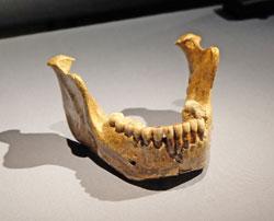 Der Unterkiefer von Mauer wird zusammen mit Schädeln aus Griechenland, Frankreich und Sambia als Homo-heidelbergensis-Gruppe aus Europa und Afrika angesehen.© massow-picture