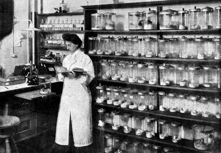 Frida Leupold beim Auswerten von Testergebnissen © Rockefeller_Archive_Center