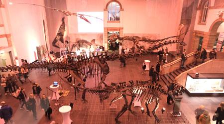 Auf eindrucksvolle Weise entführte das Senckenberg Naturmuseum in eine Welt, in der viele außergewöhnliche und seltene Ausstellungsstücke die Fantasie großer und kleiner Besucher beflügelte, hier im Saal der großen Saurier-Skelette. © massow-picture