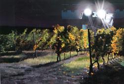 Susanne Mull: Hommage an Rheinhessen. Lässt im Hintergrund, an den Scheinwerfern zu erkennen,  den Vollernter auffahren. Foto: © massow-picture