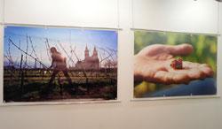 """""""Weingarten"""", eines der Ausstellungs-Sektionen wie: Himmel u. Erde, Erdzeiten, Arbeitsräume, Erfindergeist, Familiensinn, Beheimatung, Spielrunde und Zusammenspiel. © massow-picture"""
