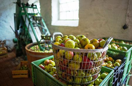 Am 15. und 16. Oktober wird im Hessenpark Apfelfest gefeiert. Foto: Freilichtmuseum Hessenpark, Foto: Wolfgang Sauer