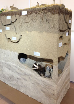 Modell der Bodenschichten und ihrer jeweiligen Bewohner. Foto: Diether v Goddenthow
