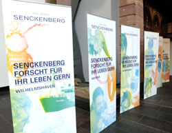 senckenbergdisplays