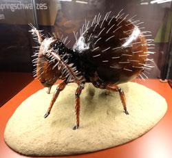 Modell einer Springschwanz Milbe, 500fach vergrößtert.Foto: Diether v. Goddenthow  © atelier goddenthow