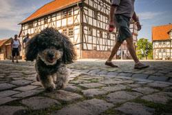 Hunde erlaubt. Ins Freilichtmuseum dürfen Besucher ihre Vierbeiner mitbringen. Foto: Jürgen Lamberti