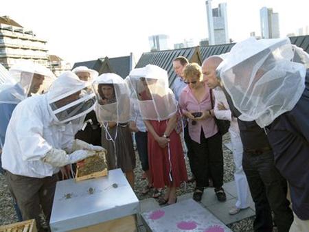 12 Bienenvölker der Künstlergruppe finger auf dem Dach des MMK beginnen jedes Jahr erneut ihre Sammelflüge in der Frankfurter Innenstadt. Der Produktionsstandort der Stadtimkerei auf dem Dach des MMK umfasst etwa 650.000 Bienen und wird von den Künstlern Florian Haas und Andreas Wolf liebevoll gehegt und gepflegt. Foto: Axel Schneider