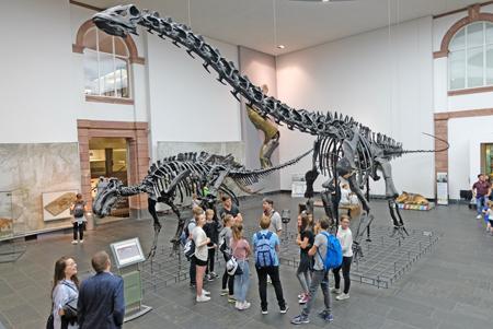"""Zuschauermagnet """"Diplodocus longus"""" im Sauriersaal, dessen  Originalskelett  1906 dem Frankfurter Senckenberg Naturmuseum geschenkt wurde. Foto: Diether v. Goddenthow © atelier-goddenthow"""