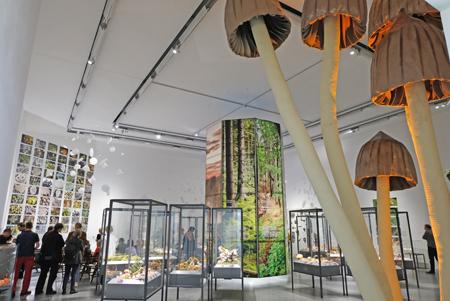 """Austellungs-Impression """"Pilze, Nahrung, Gift und Mythen"""", vom 11. Juni 2017 bis 5. August 2018 im Hessischen Landesmuseum Wiesbaden. Foto: Diether v. Goddenthow © atelier-goddenthow"""