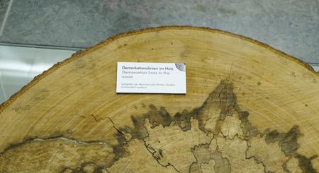 Wenn verschiedene Pilze zusammentreffen, etwa wie hier gezeigt in einem Baumstamm, kann es zu regelrechten Kriegen mit Grenzziehungen, sogenannten Demarkationslinien, im Holz kommen. Foto: Diether v. Goddenthow © atelier-goddenthow
