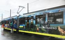 Die Senckenberg-Bahn. © Senckenberg/Jördens