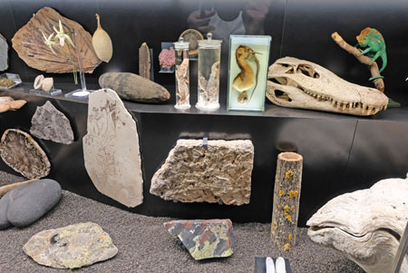 """In der Ausstellung """"Faszination Vielfalt"""" begegnen sich dicht an dicht Tiere, Fossilien und Pflanzen aus unterschiedlichen Lebensräumen und Zeitscheiben. Foto: Diether v. Goddenthow"""