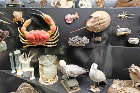 Sammlungsstücke aus 200 Jahren Senckenberg-Forschung. Alles gehört mit allem zusammen. Foto: Diether v. Goddenthow
