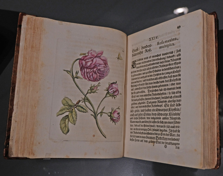 Das Raupenbuch machte Merian bekannt und war zugleich ein wirtschaftlicher Erfolg. Foto: Diether v. Goddenthow