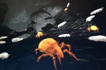 """Auf Tuchfühlung mit einer Hornmilbe – in der Virtual-Reality-Animation """"Boden"""". Copyright: hapto"""