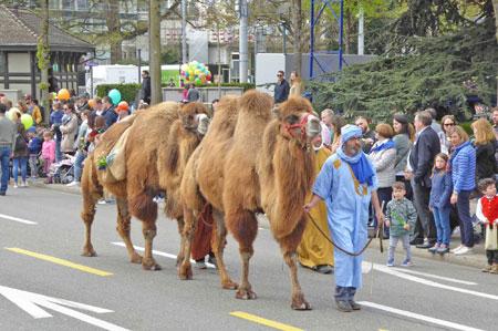 3. Bildunterschrift: Die Händler aus dem Orient hatten ihre Kamele dabei – die an normalen Tagen als Trampeltiere ein ruhigeres Leben im Zürcher Zoo verbringen. © Foto: Jutta Ziegler
