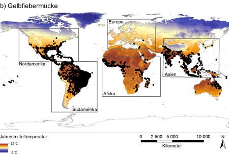 Abb. 1: Weltweite Verbreitung der beiden invasiven Stechmückenarten, hier die Gelbfiebermücke (Aedes aegypti) und betrachtete Gebiete. Foto von Dorian D. Dörge (Goethe-Universität)