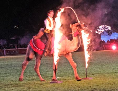 Trampeltierwallach Sahib von Frank Bock des Camel Show Teams in Sauldorf.© Foto: Diether v. Goddenthow