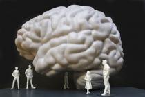 So soll das begehbare Gehirn im neuen Senckenberg aussehen. Copyright: Modell: Hertie-Stiftung 2018, Alexander Grychtolik/Foto: U. Dettmar