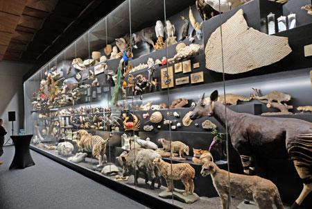Die Sammlung des Senckenberg Naturmuseums öffnet ebenfalls ihre Tore und lädt Neulinge und Kenner zu öffentlichen Führungen ein. Bild: Schauwand zum Thema  Biodiversität über die Vielfalt von Arten und Ökosystemen. © Foto: Diether v. Goddenthow