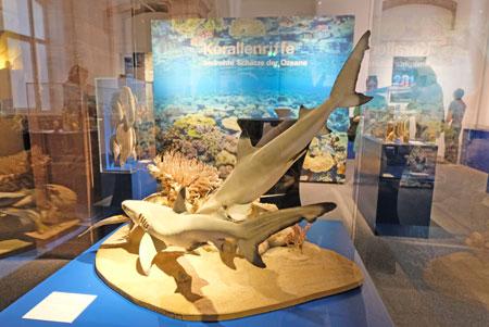 """Sonderausstellung """"Korallenriffe – Bedrohte Schätze der Ozeane"""" im Senckenberg Naturmuseum.© Foto: Diether v. Goddenthow"""