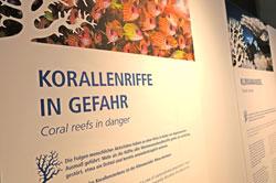 10.korallenriffe-i.gefahr25