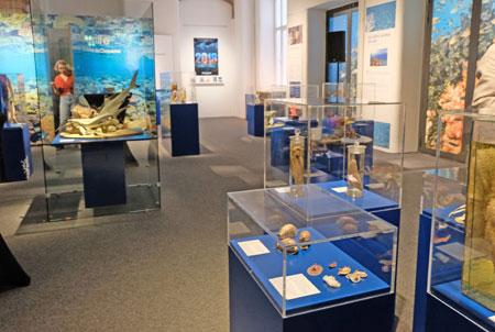"""Impression der Sonderausstellung """"Korallenriffe – Bedrohte Schätze der Ozeane"""" im Senckenberg Naturmuseum.© Foto: Diether v. Goddenthow"""