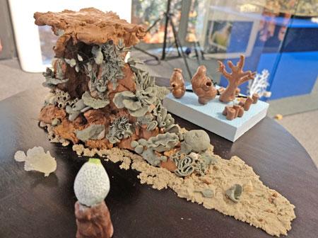 Die Präparatorinnen Hildegard Enting, Sylva Scheer und Anna Frenkel erarbeiten hierfür die Darstellung eines Riff-Lebensraums, die ein tropisches Korallenriff in seiner vollen Vielfalt als Biodiversitäts-Hot-Spot im neu gestalteten Museumsraum ab 2020 zeigen soll. © Foto: Diether v. Goddenthow