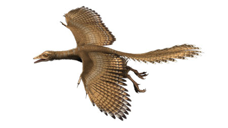 Archaeopteryx Nr. 11. Fluganimation. © Die Infografen /Senckenberg Naturmuseum