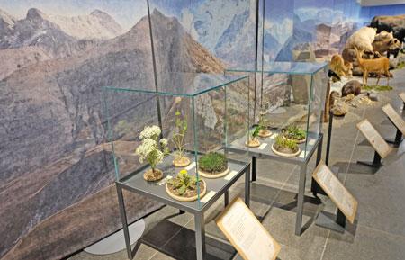 Die Pflanzenwelt der letzten Kaltzeit Europas.© Foto: Diether v. Goddenthow
