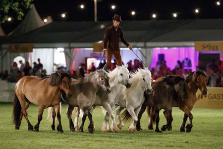 Pferde, Pferde, Pferde – im Mittelpunkt der Wiesbadener PferdeNacht seit 25 Jahren! Foto: Sprtfotos Lafrentz.de