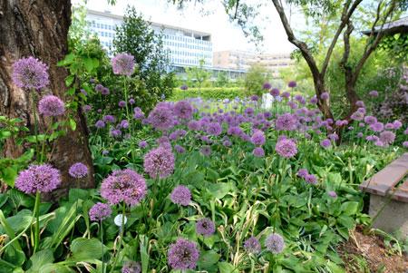 Impressionen aus dem Botanischen Garten.© Foto: Diether v. Goddenthow