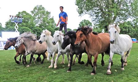 Noch kurz vor dem Gewitter brachte Pferdeflüsterer Pierre Fleury seine Herde von 8 Pferden in Gleichklang. © Foto: Diether v. Goddenthow