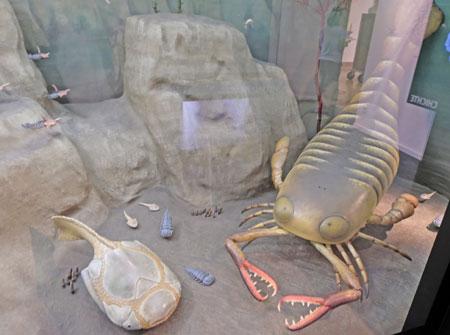 Die Rekonstruktion des weltweit einzigartigen  Gliederfüsslers mit seinen Scheren. ©  Foto: Diether  v Goddenthow