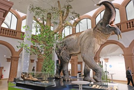 """In der neuen Eingangshalle des Naturhistorischen Museums Mainz begrüsst das """"Schreckens-Tier"""", ein Hauerelefant. das Wappentier des nhm, den Besucher.   ©  Foto: Diether  v Goddenthow"""