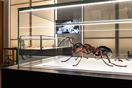 Blick in die Studienausstellung © Museum Wiesbaden, Foto: Bernd Fickert