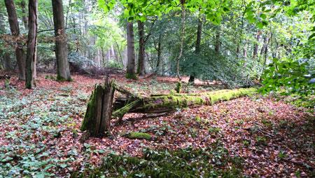 Mitunter geht's fernab von ausgebauten Forstwegen querwaldein und sorgt für einmalige Naturerlebnisse. © Foto: Diether v. Goddenthow