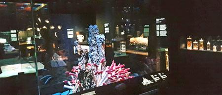 """Die Dauerausstellung Tiefsee und Meeresforschung gibt umfangreiche Einblicke anhand von zahlreichen Originalpräparaten aus der Sammlung Senckenberg sowie Spezialanfertigungen wie den Lebensraum """"Schwarzer Raucher"""" hier im Bild. © Foto: Diether v. Goddenthow"""