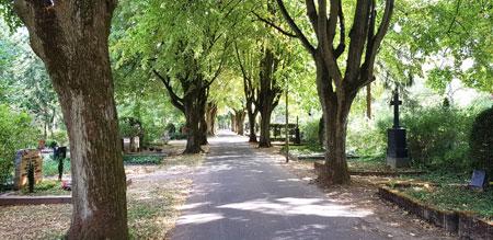 Impression Lindenallee im Wiesbaden-Biebricher Friedhof. © Foto: Diether v. Goddenthow