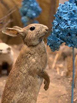 Das Naturhistorische Museum macht blau Bildrechte © nhm mz